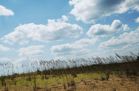 Colorful fields - Landscape  grass, blue sky and white clouds Stock Photo - 759925