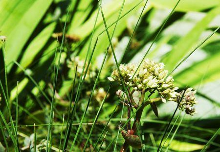 Grass on the garden photo