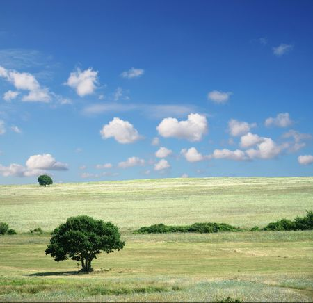 Colorful fields - Landscape  grass, blue sky and white clouds Stock Photo - 784875