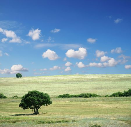 Colorful fields - Landscape  grass, blue sky and white clouds Stock Photo - 784821