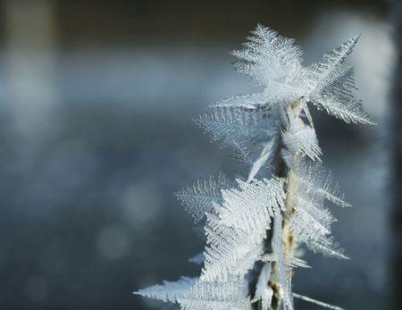 iceflower: close-up di ghiaccio