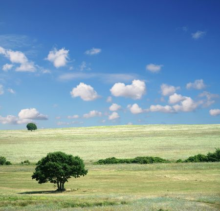 Colorful fields - Landscape  grass, blue sky and white clouds Stock Photo - 813885