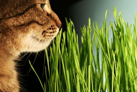cats portrait on grass background Stock Photo