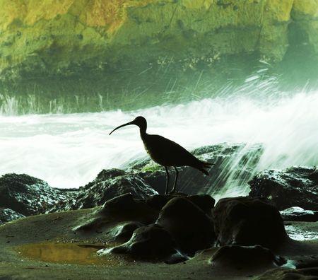 Bird silhouette in the grotto photo