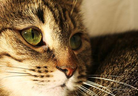 whiskar: cats portrait Stock Photo