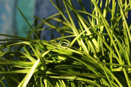 dewdrop: Dew-drop on grass