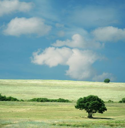 Colorful fields - Landscape  grass, blue sky and white clouds Stock Photo - 856003
