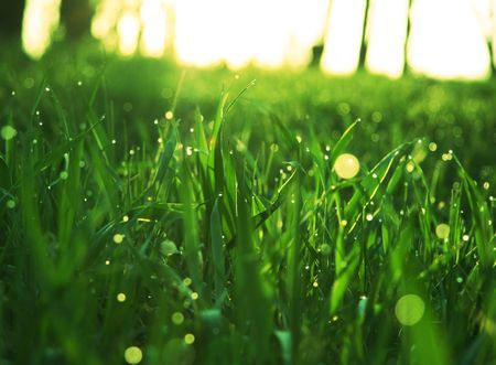 Green  grass Stock Photo - 889456