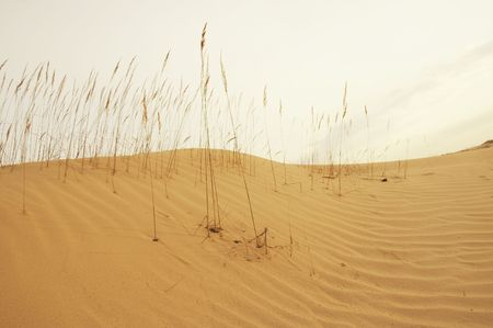 tussle: Grass in sand desert