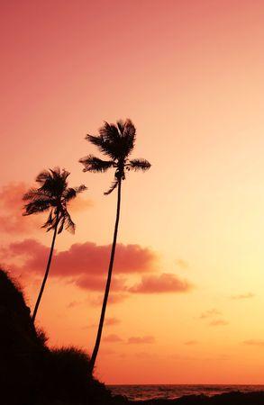 Palm on sunset of sea coast Stock Photo - 936855