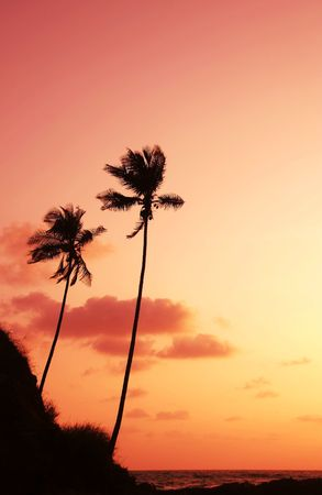 melodious: Palm on sunset of sea coast Stock Photo