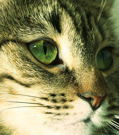 whiskar: cats portrait close up Stock Photo