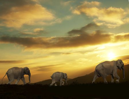 Three elephants going on sunset background photo