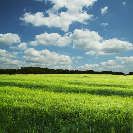 Green grassland and sky for background Stock Photo - 1015216