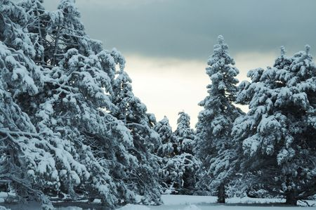 Winter forest in Crimean mountains Stock Photo - 1202077
