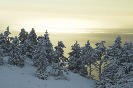Christmas theme-snowcovered forest Stock Photo - 1202078