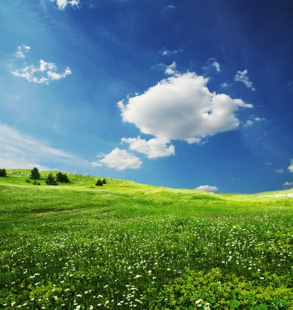 Green grassland and sky in the morning Stock Photo - 1281512