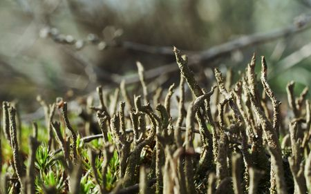 woodscape: Moss close up in forest
