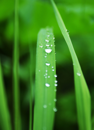 Drops on green grass photo