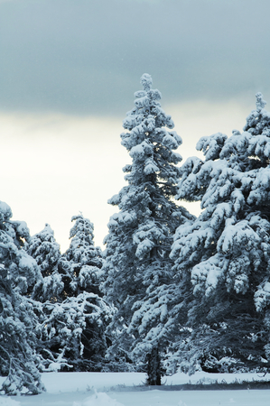 Winter forest in Crimean mountains Stock Photo - 1431117