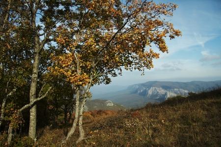 Mountain and tree in Crimea Stock Photo - 1471252