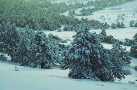 Winter forest in Crimean mountains Stock Photo - 1477928
