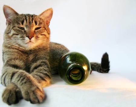whiskar: Cat and bottle Stock Photo