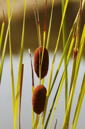 swampland: Canes