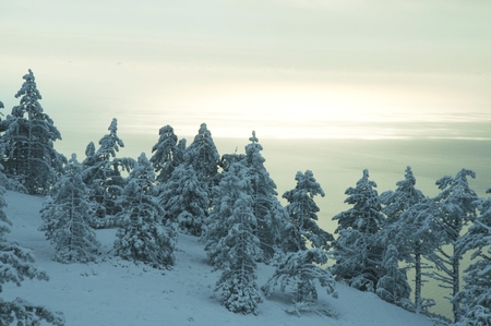 Winter forest in Crimean mountains Stock Photo - 1612934