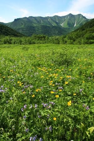 Mountains meadow on Kamchatka photo