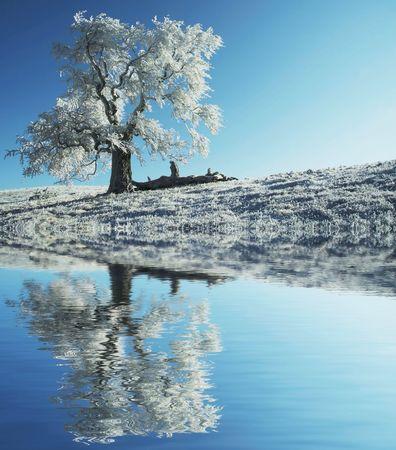 Alone frozen tree Stock Photo - 1737498