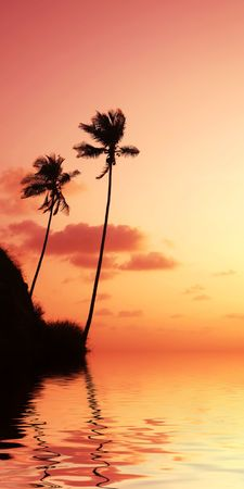 Palm on sunset of sea coast Stock Photo - 1737471