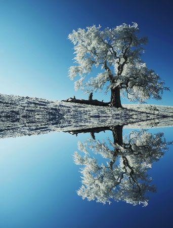 Alone frozen tree  Stock Photo - 1807714