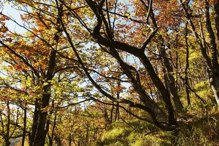 Autumn trees   in Crimean mountain Stock Photo - 1807881