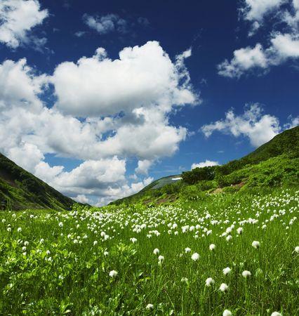 Summer green grassland in mountain photo