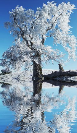 Alone frozen tree reflection Stock Photo - 1807787