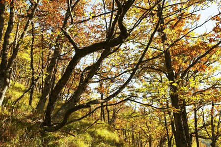 Autumn trees   in Crimean mountain Stock Photo - 1830188