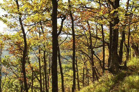 Yellow trees  in the autumn season Stock Photo - 1830191