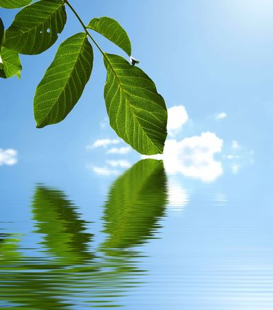 Green branch reflection Stock Photo - 1830134