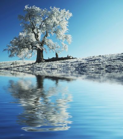 Alone frozen tree reflection Stock Photo - 1868518