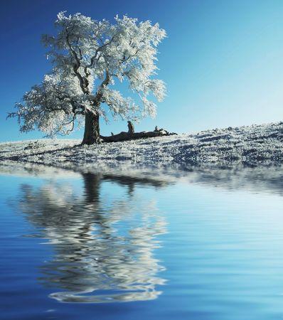 Alone frozen tree reflection Stock Photo - 1868518