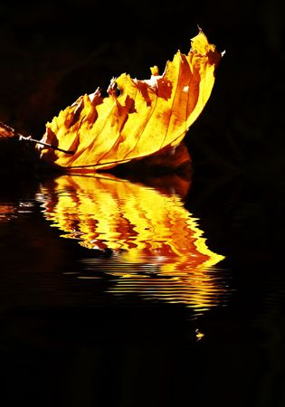 Yellow autumn  leaves reflection Stock Photo - 1895021