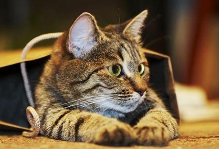 striker: Cat