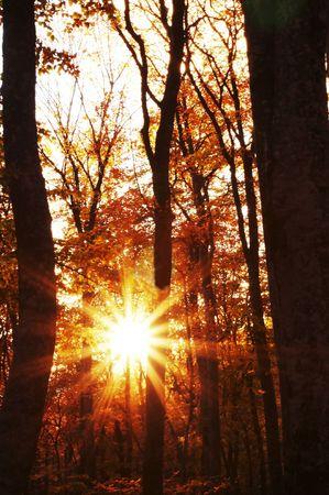 Sun in autumn forest photo