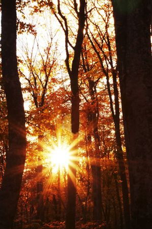 Sun in autumn forest photo