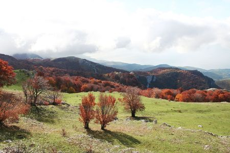 woodscape: Autumn in the Crimean mountain Stock Photo
