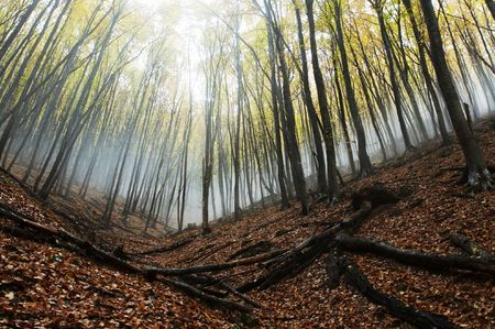 Magic forest of misty Stock Photo