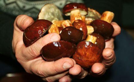 hongos en las manos Foto de archivo - 2068284