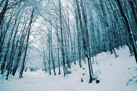 Winter forest in Crimean mountains Stock Photo - 2068318