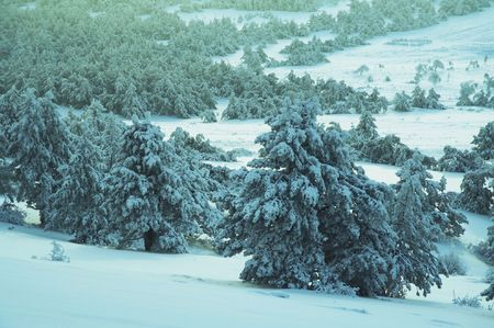 Winter forest in Crimean mountains Stock Photo - 2085984